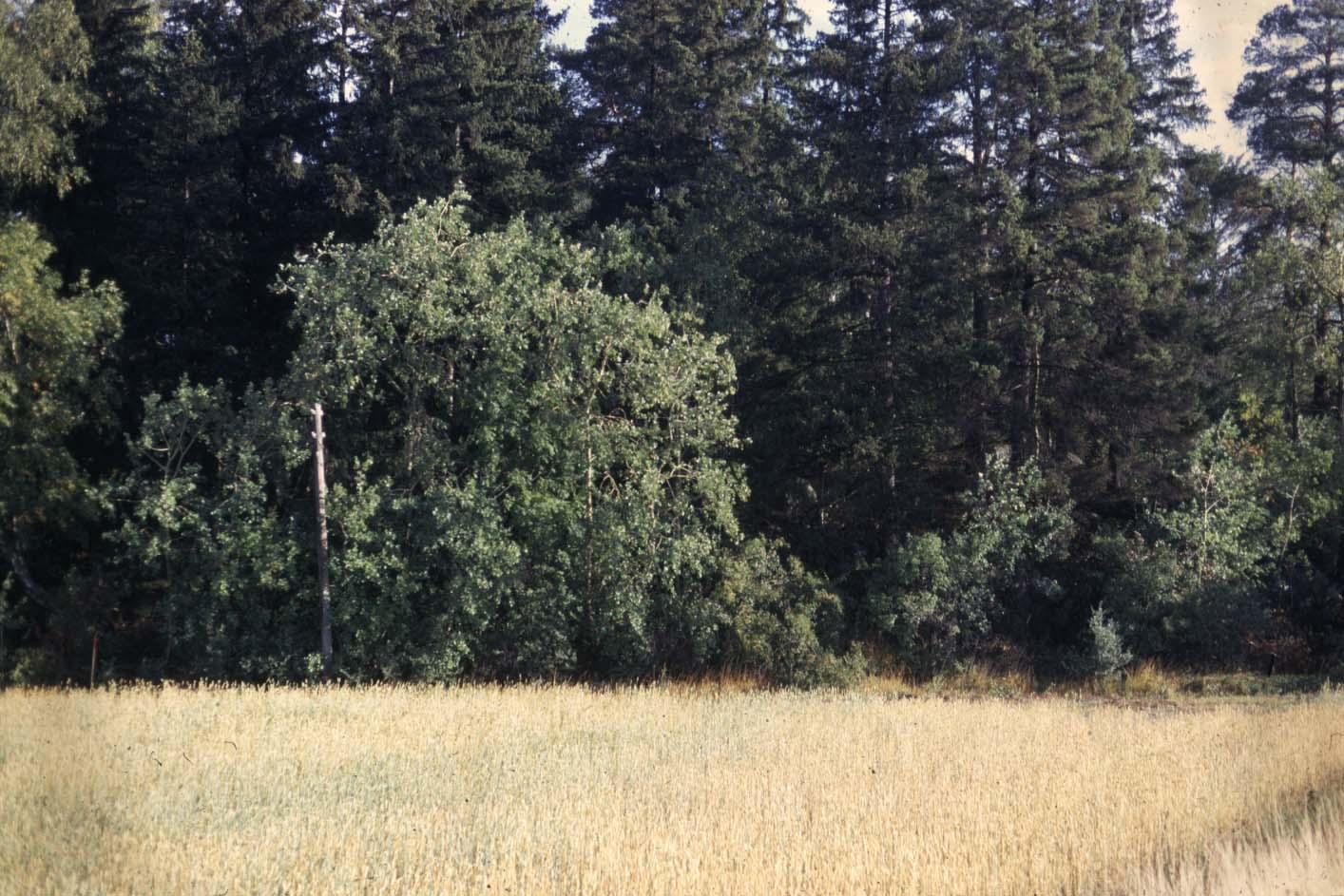 Inredning boplats stockholm : Gravfält och boplats (romersk järnålder ; vikingatid), fornlämning ...